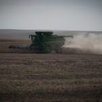 Harvest 2013 beans