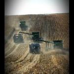 Harvest 2013 corn